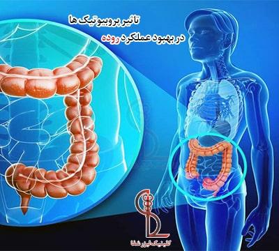 تاثیر پرو بیوتیک ها در بهبود عملکرد روده